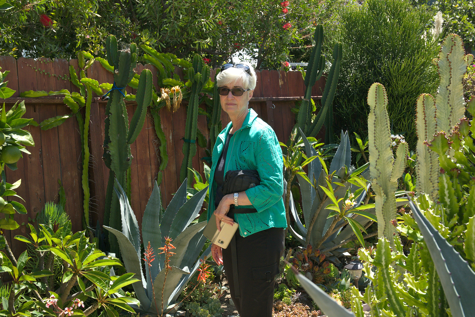 Lynda Johnson's Garden