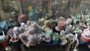 Gary Duke's greenhouse