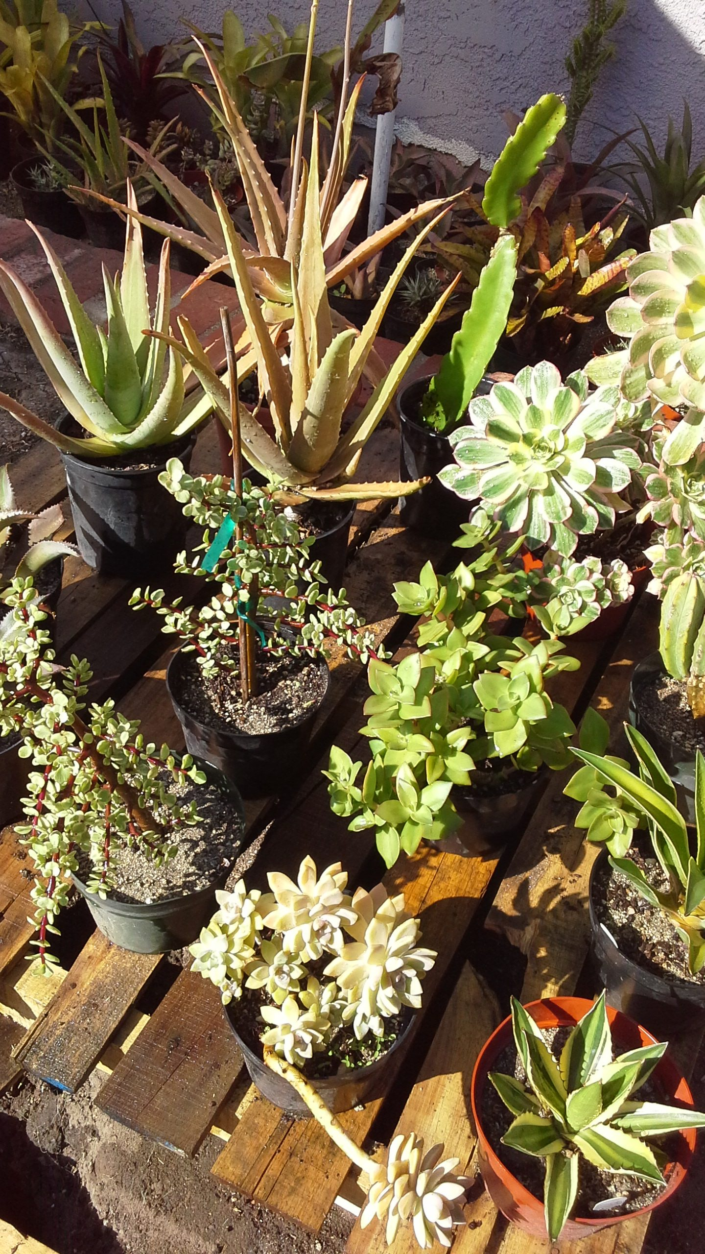 Greg Horn's Plants