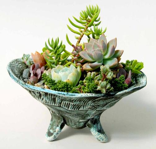 Succulent Dish Garden 3
