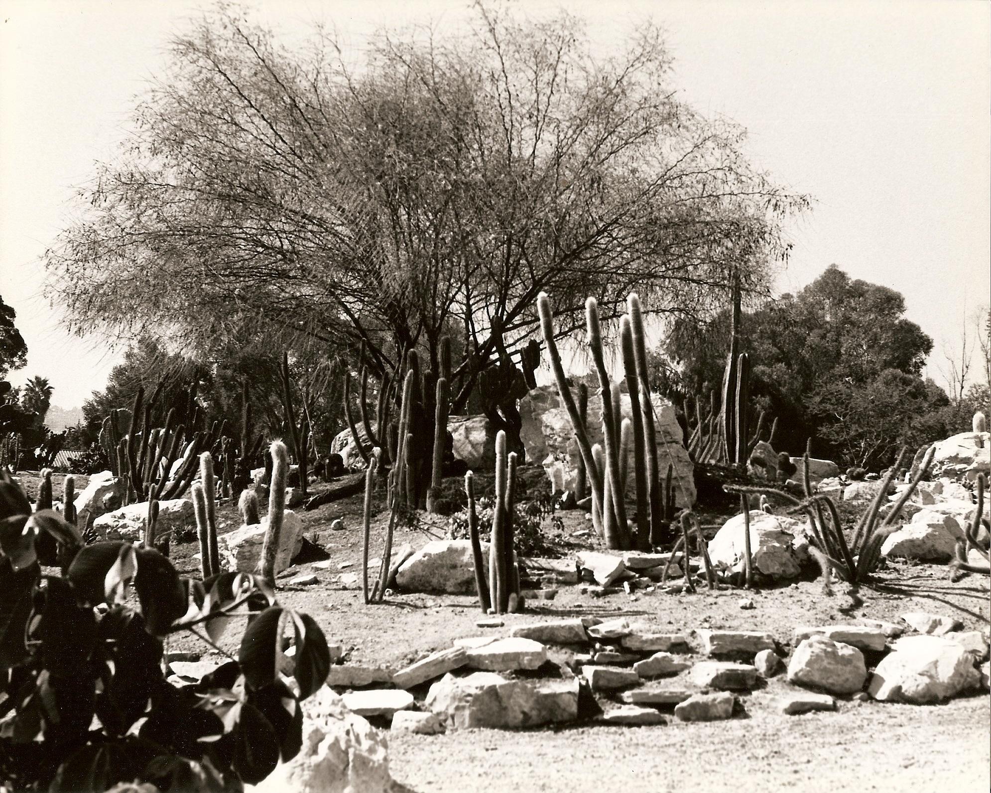 1988 Cactus Garden
