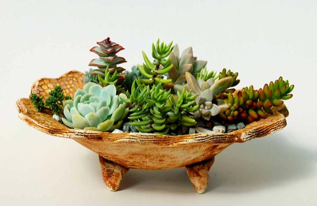 Succulent Dish Garden 2