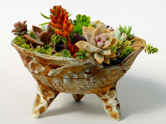 Succulent Dish Garden 4
