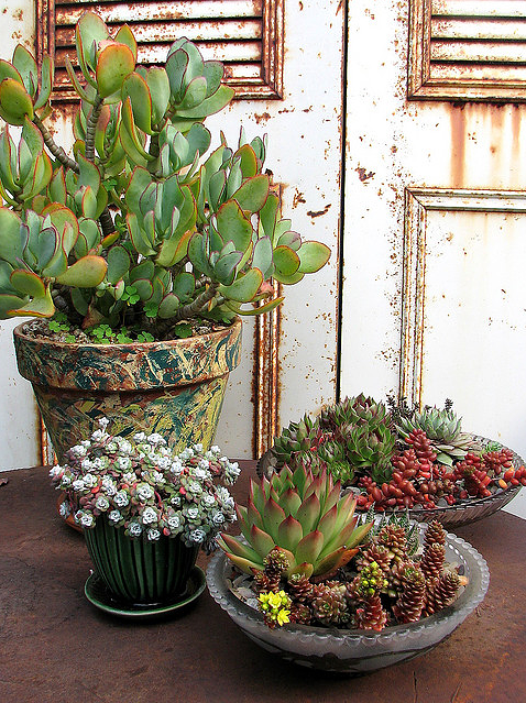 Succulent Dish Garden 7
