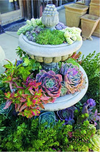 Succulent Dish Garden 8