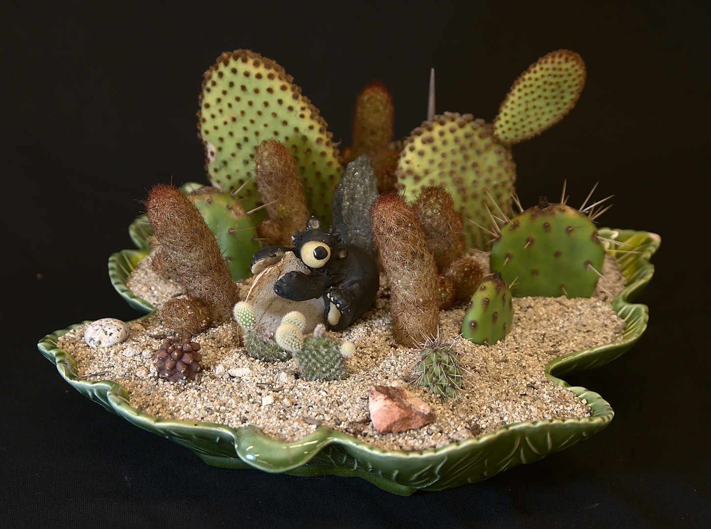 SCCSS 2019 May - Winner Open Cactus - Phyllis DeCrescenzo