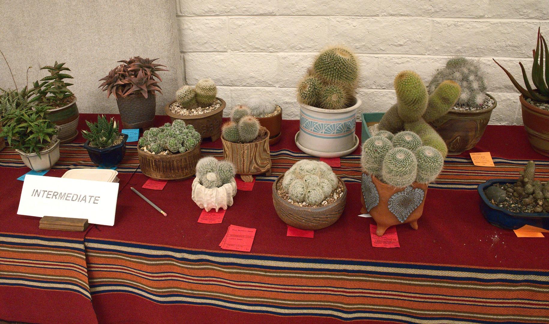 Intermediate Cactus