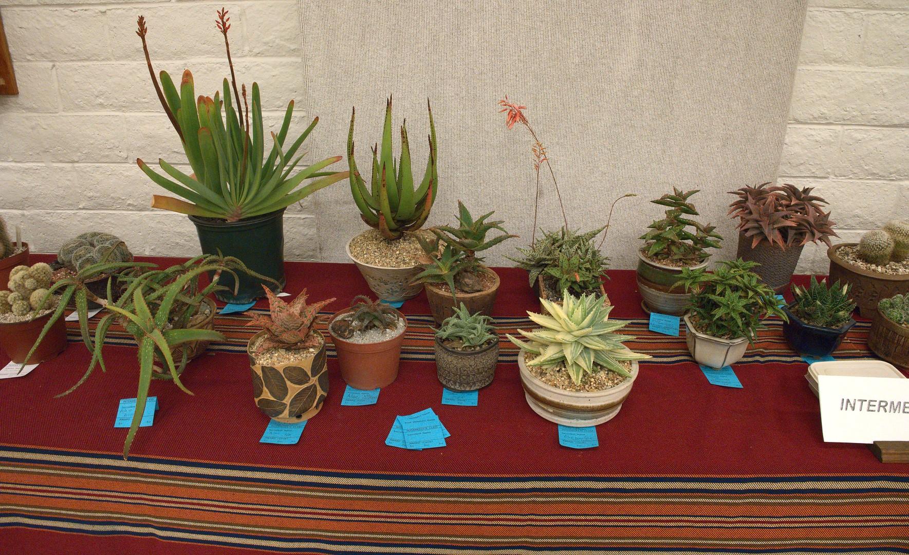 Intermediate Succulent