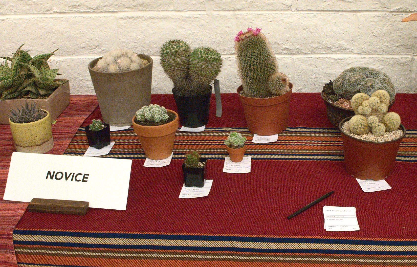 Novice Cactus