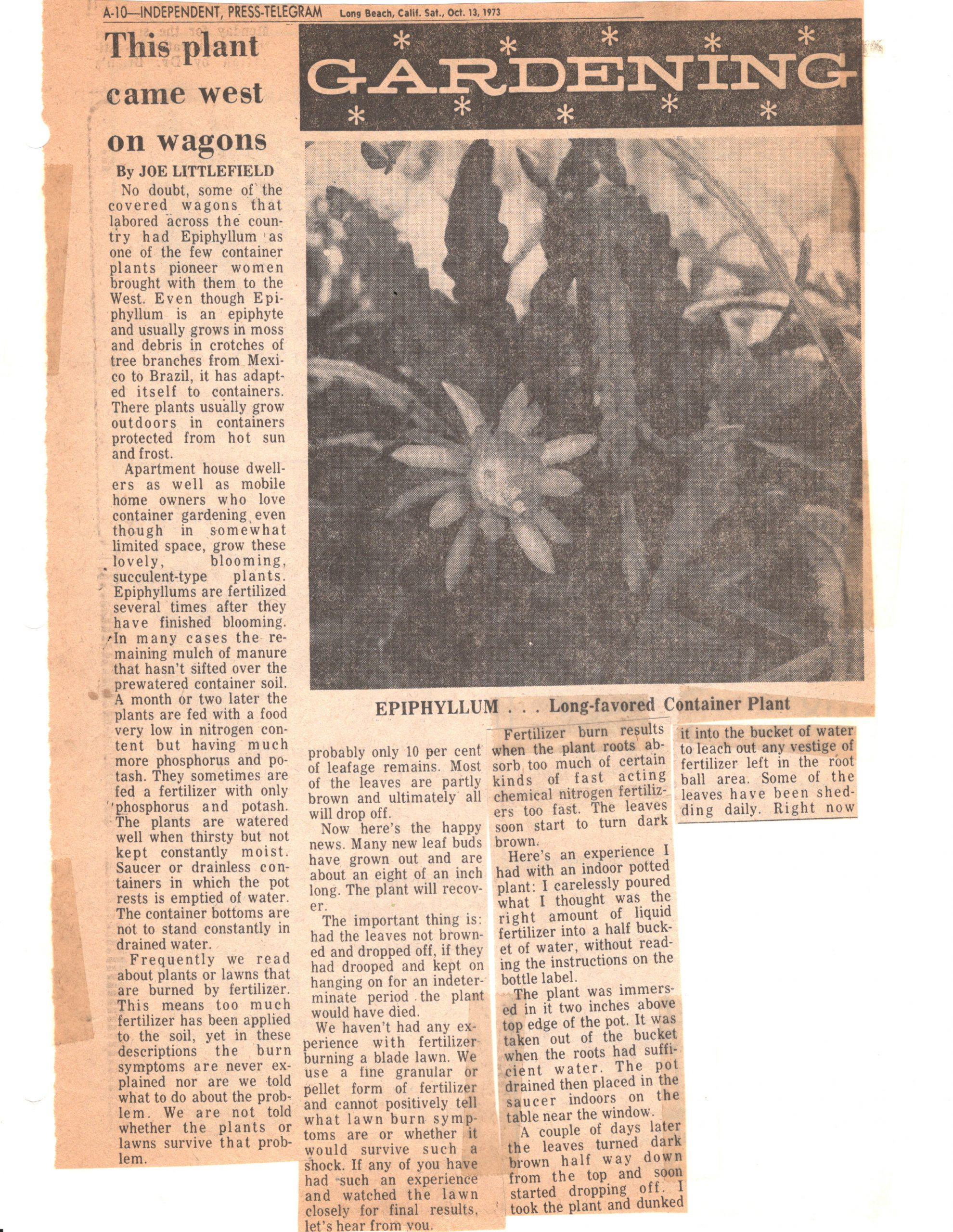 SCCSS-Cuttings-1973-10-13