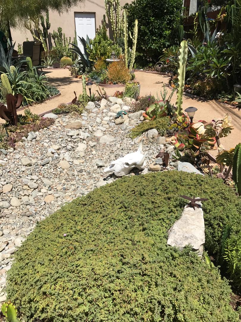 Lynda Johnson's Garden